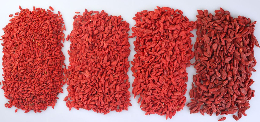 Химический состав ягод Годжи